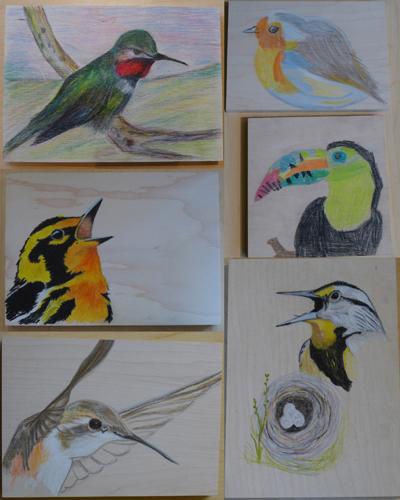 BirdDrawingResults2