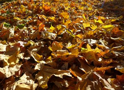 leafpiles
