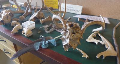skullgames