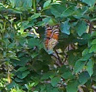 monarchflutter