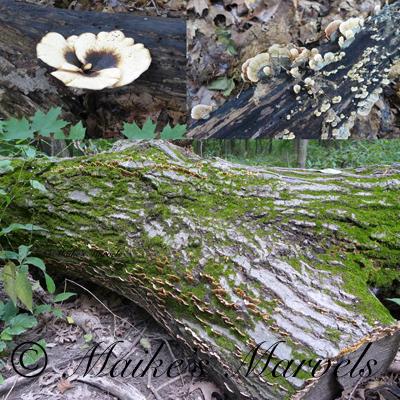 mushroomart