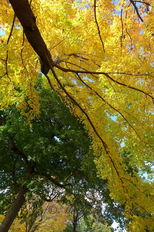 goldengreenbranch