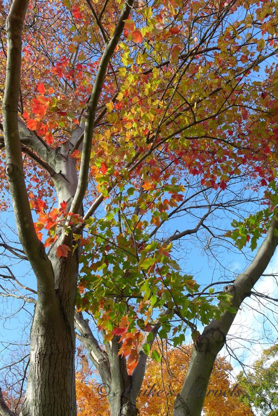 redgoldandgreen